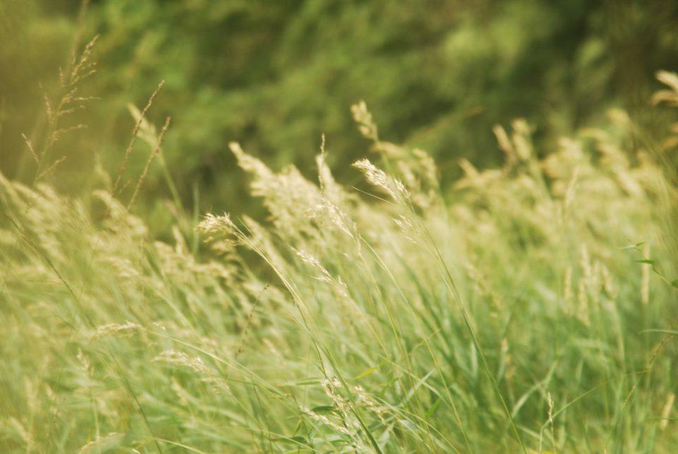 Garmischer Natur Gräser