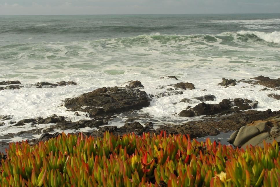 Küste nahe Santa Cruz