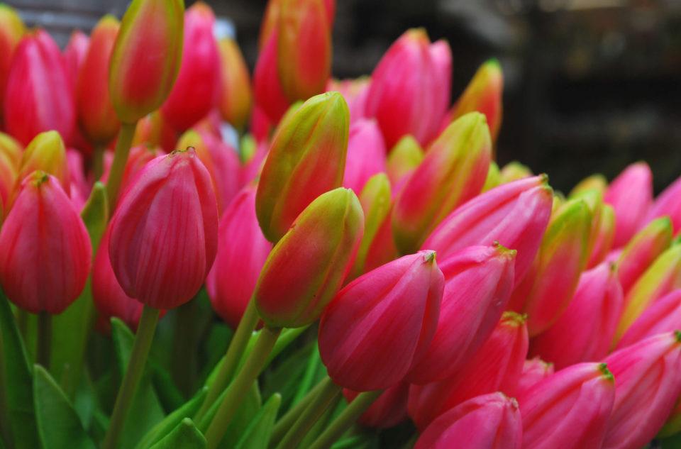 Blumenmarkt in Amsterdam