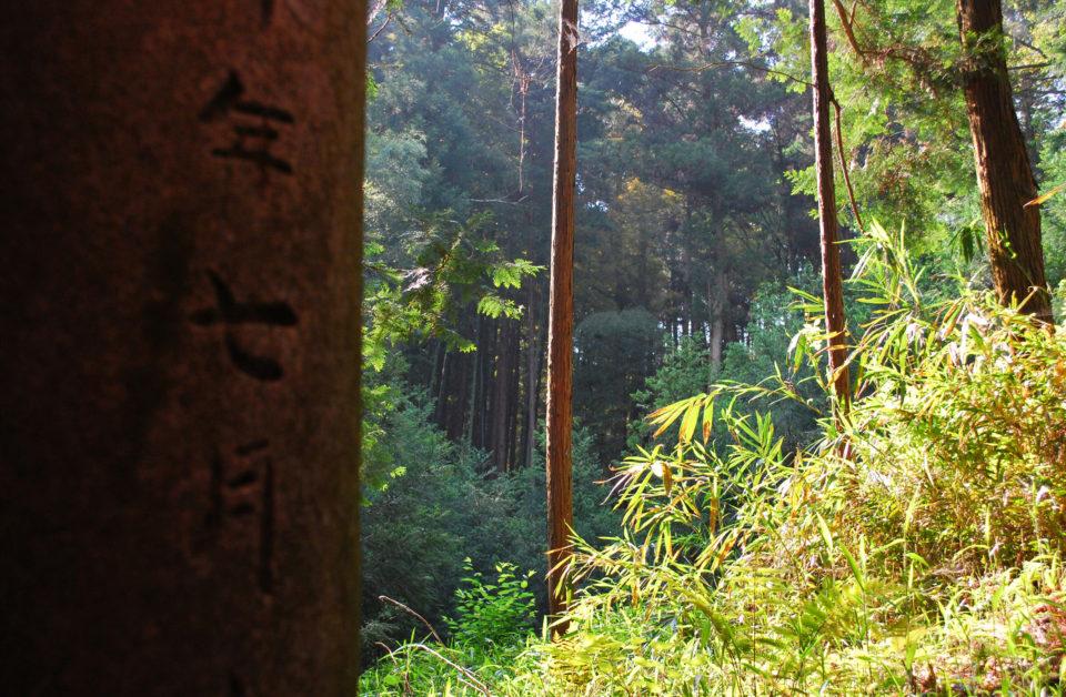 Fushimi Inari-Taisha wälder