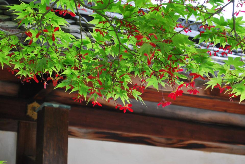 Kaiserpalast von Kyoto pflanzen
