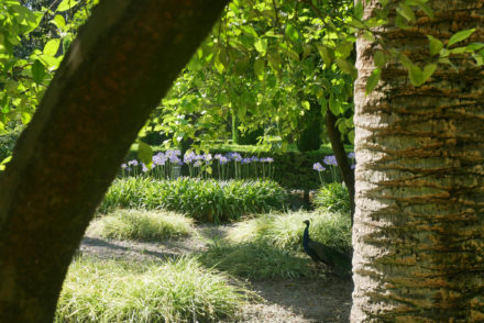 Alcazar Sevilla Garten Pfau