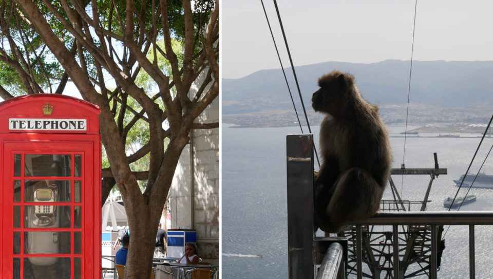 Gibraltar Affen Telefonzelle