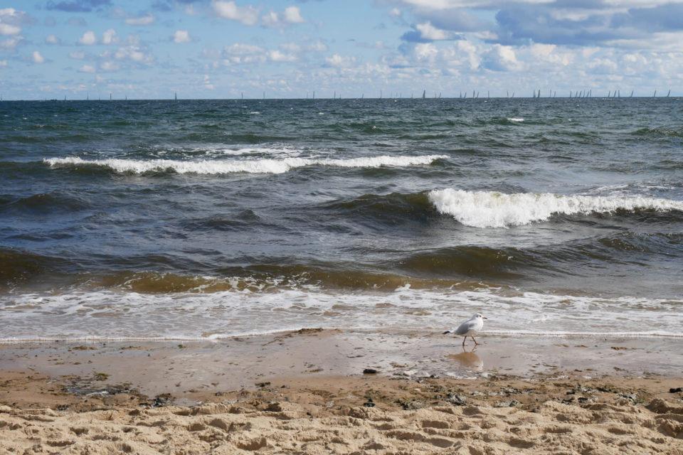 Danziger Bucht Strand