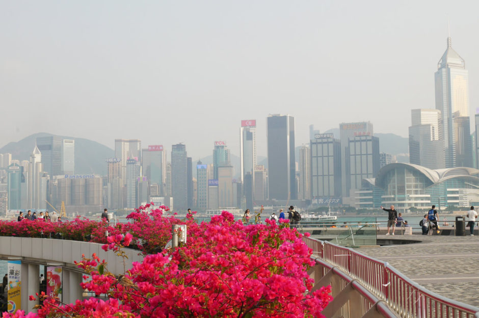 hongkong skyline flowers