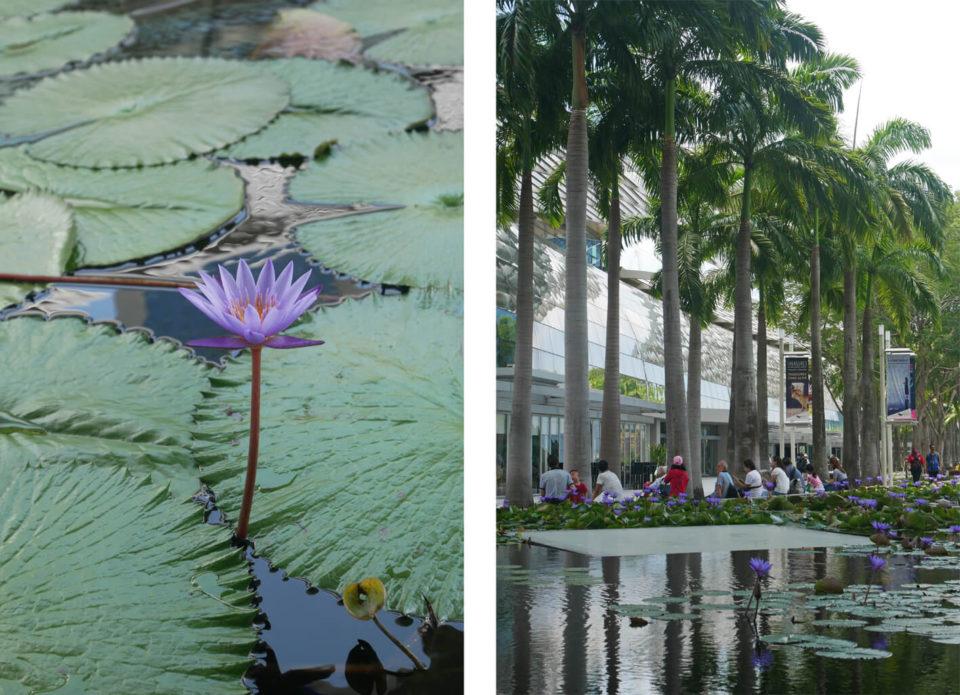 marina bay orchideen
