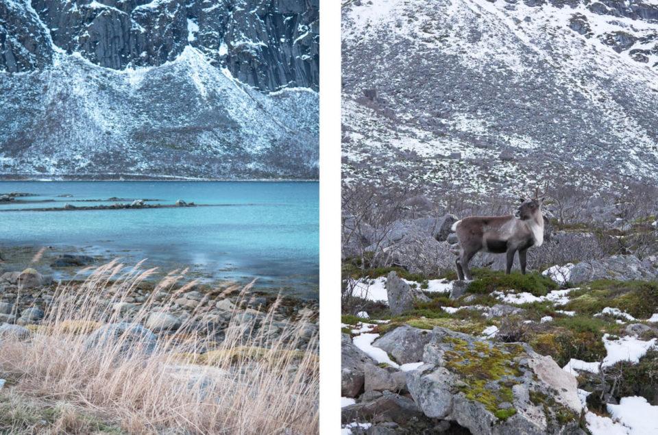 rentiere troms fjord