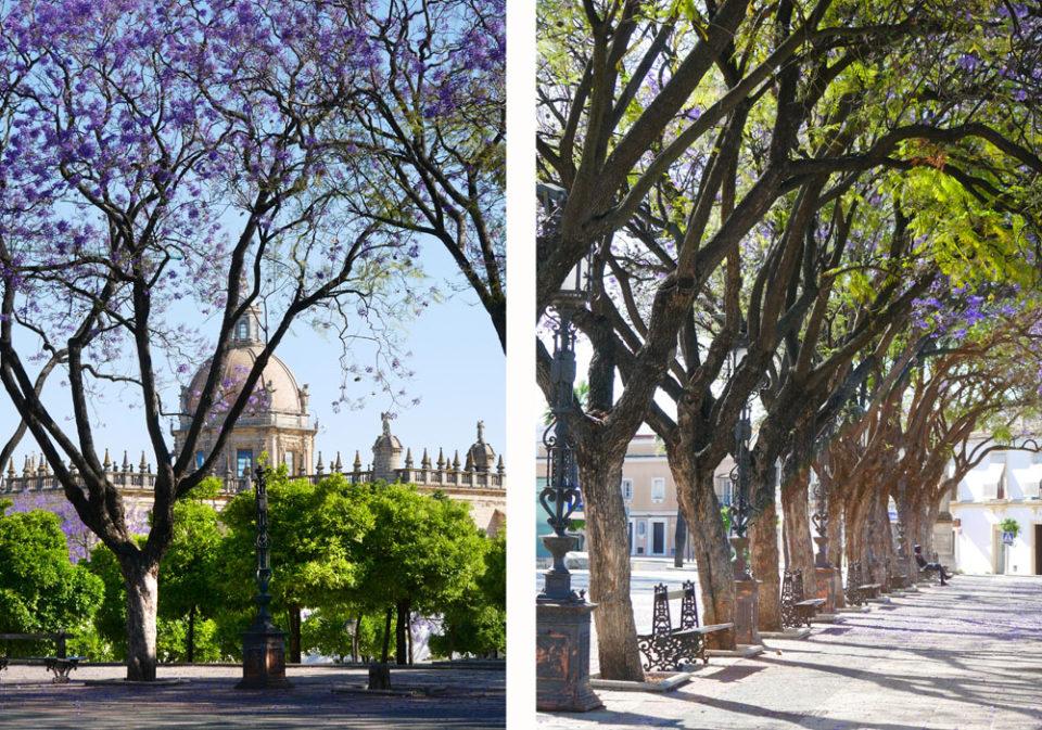 jerez de la frontera blaue bäume